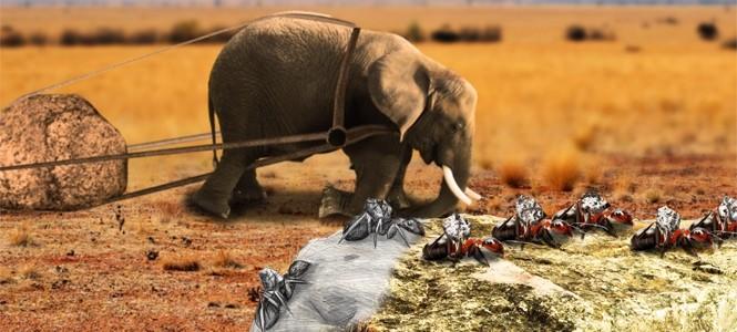 elefante rapido