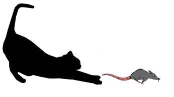 gato-y-raton